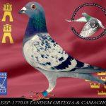 177018 TANDEM ORTEGA  & CAMACH0