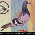 93650 AURLIO Y JOSE CARLOS