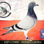 PEDRO LASTRA
