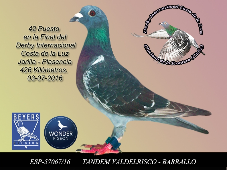 42 TANDEM VALDELRISCO - BARRALLO