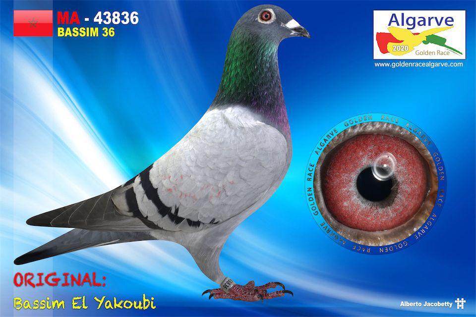 MAR-43836/20 - MACHO -