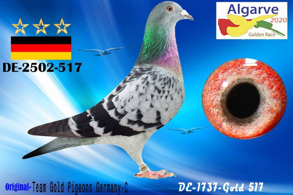 DV-02502-517/20 - MACHO - TEAM GOLD PIGEONS GERMANY-C
