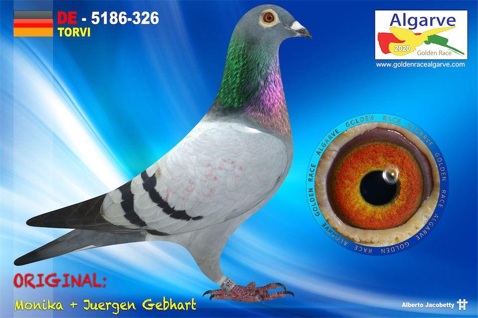 DV-05186-326/20 - HEMBRA - MONIKA + JUERGEN GEBHART