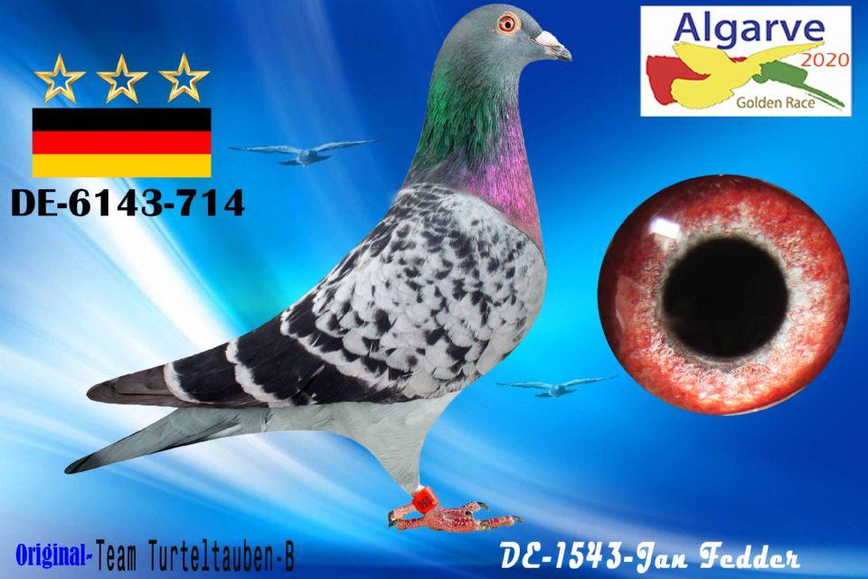 DV-06143-714/20 - MACHO - TEAM TURTELTAUBEN-B