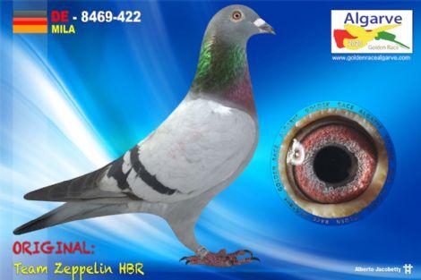 DV-08469-422/20 - HEMBRA - TEAM ZEPPELIN HBR