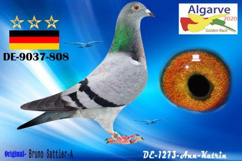 DV-09037-808/20 - HEMBRA - BRUNO SATTLER-A