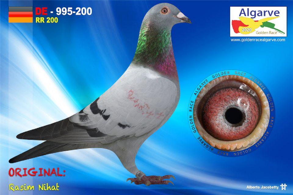 DV-0995-200/20 - HEMBRA - RASIM NIHAT