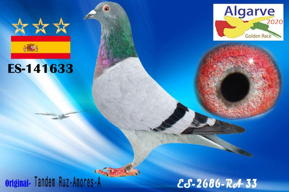ESP-141633/20 - MACHO - TANDEM RUZ - AMORES-A