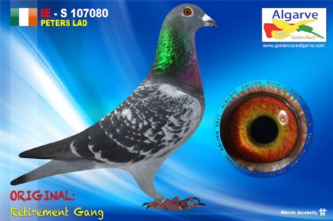 IHU-S-107080/20 - MACHO - RETIREMENT GANG