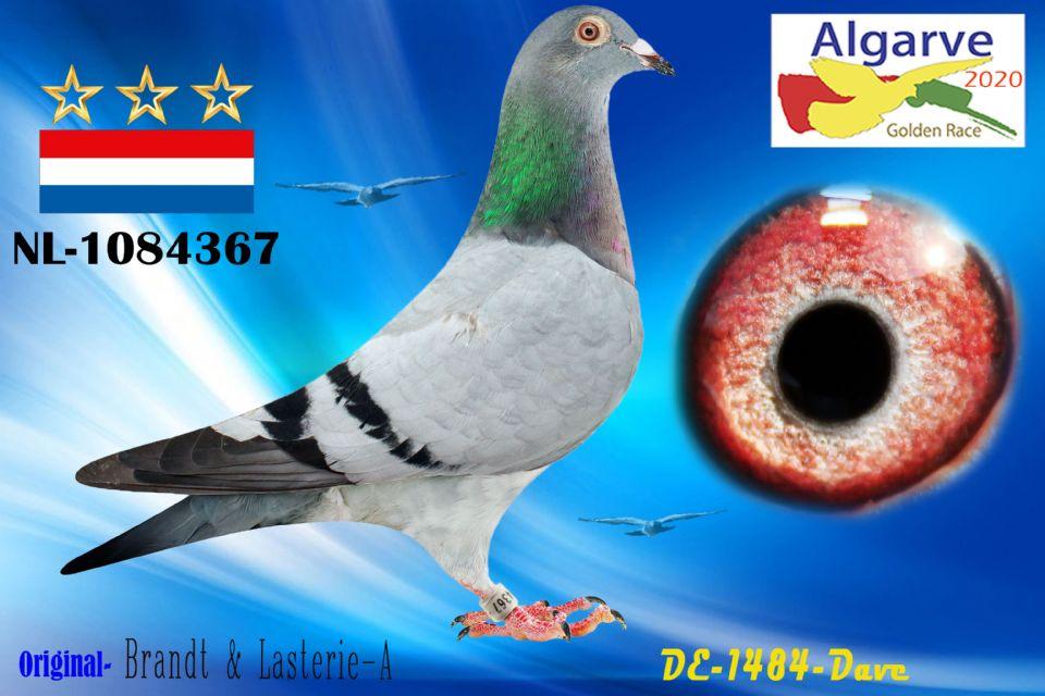 NL-1084367/20 - MACHO - BRANDT & LASTERIE-A