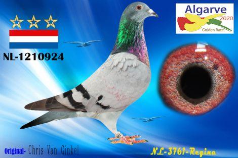 NL-1210924/20 - MACHO - CHRIS VAN GINKEL