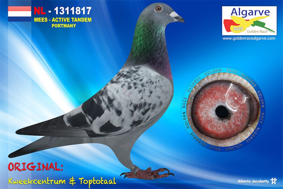 NL-1311817/20 - MACHO - KWEEKCENTRUM & TOPTOTAAL