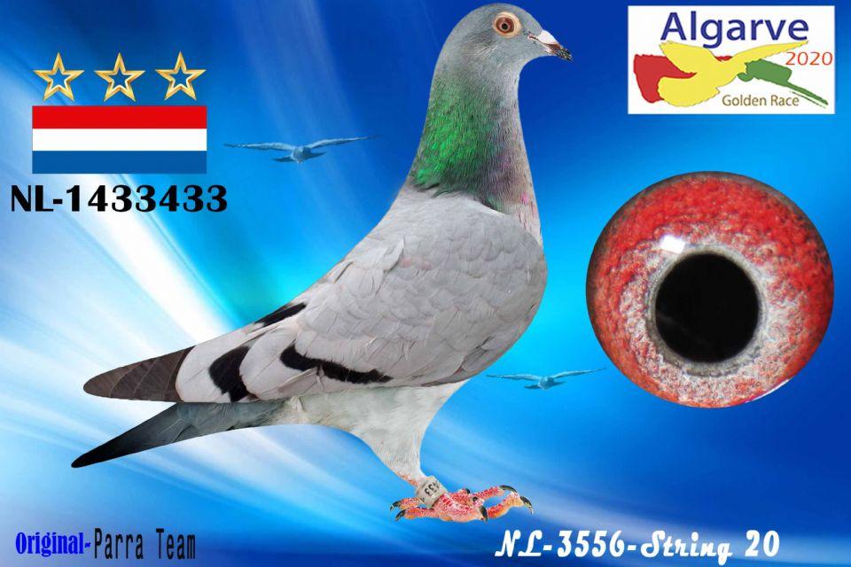 NL-1433433/20 - HEMBRA - PARRA TEAM