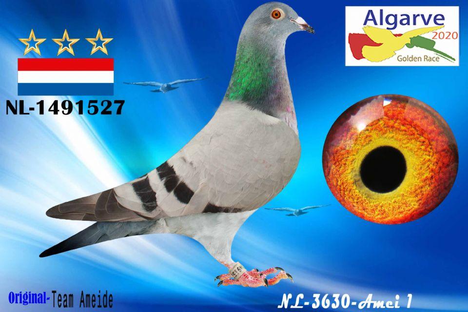NL-1491527/20 - MACHO - TEAM AMEIDE