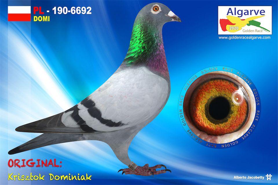 PL-0190-6692/20 - MACHO - KRISZTOK DOMINIAK