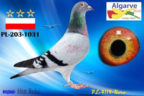 PL-0203-1031/20 - MACHO - ADAM MOSKAL