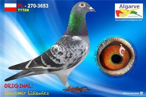 PL-0270-3653/20 - MACHO - SLAWOMIR LISIEWICZ