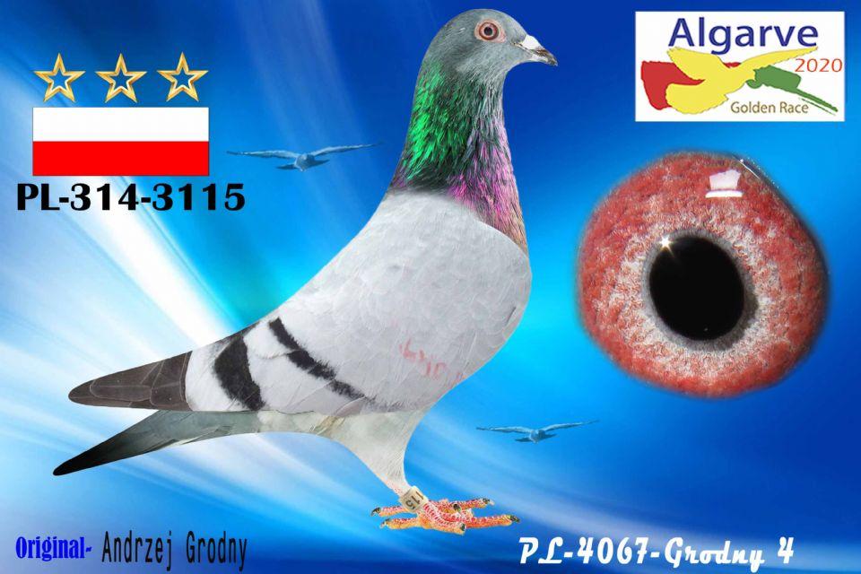 PL-0314-3115/20 - MACHO - ANDRZEJ GRODNY