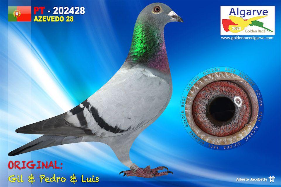 POR-0202428/20 - HEMBRA - GIL & PEDRO & LUIS