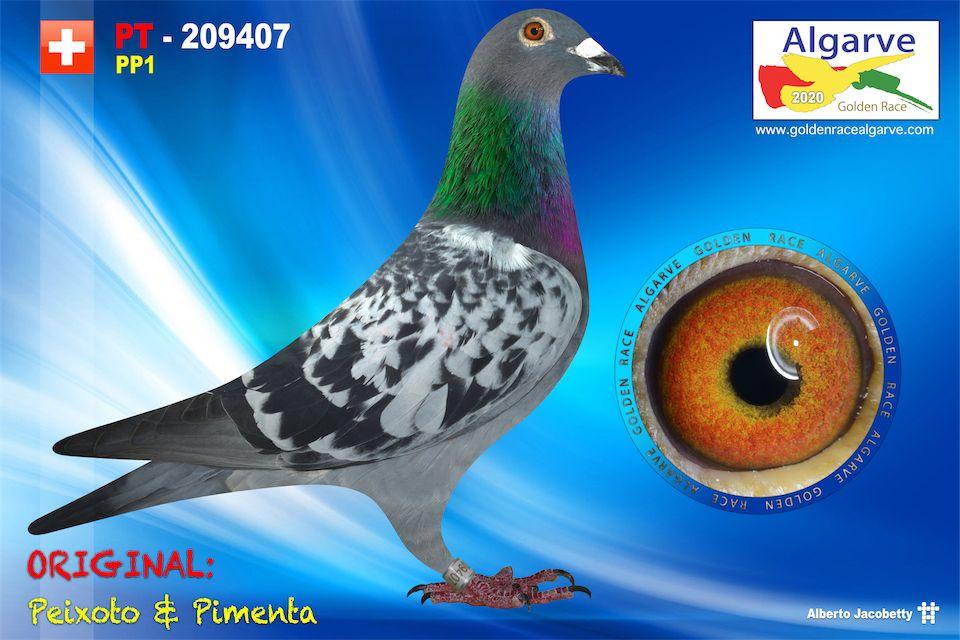 PT-0209407/20 - MACHO - PEIXOTO & PIMENTA