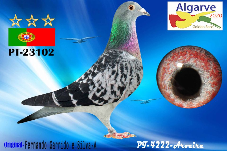 POR-0023102/20 - HEMBRA - FERNANDO GARRIDO E SILVA-A