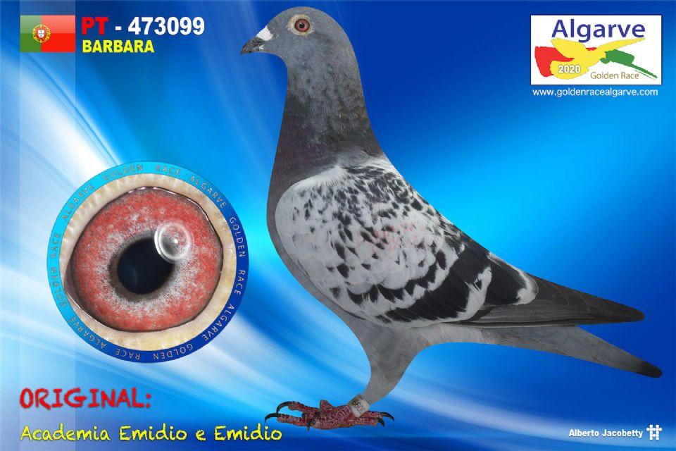 PT-0473099/20 - MACHO - ACADEMIA EMIDIO E EMIDIO