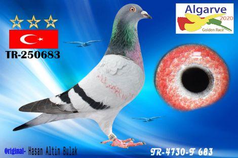 TR-250683/20 - MACHO - HASAN ALTIN BULAK