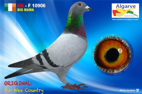 GB-Z-10906/20 - MACHO - OUR WEE COUNTRY