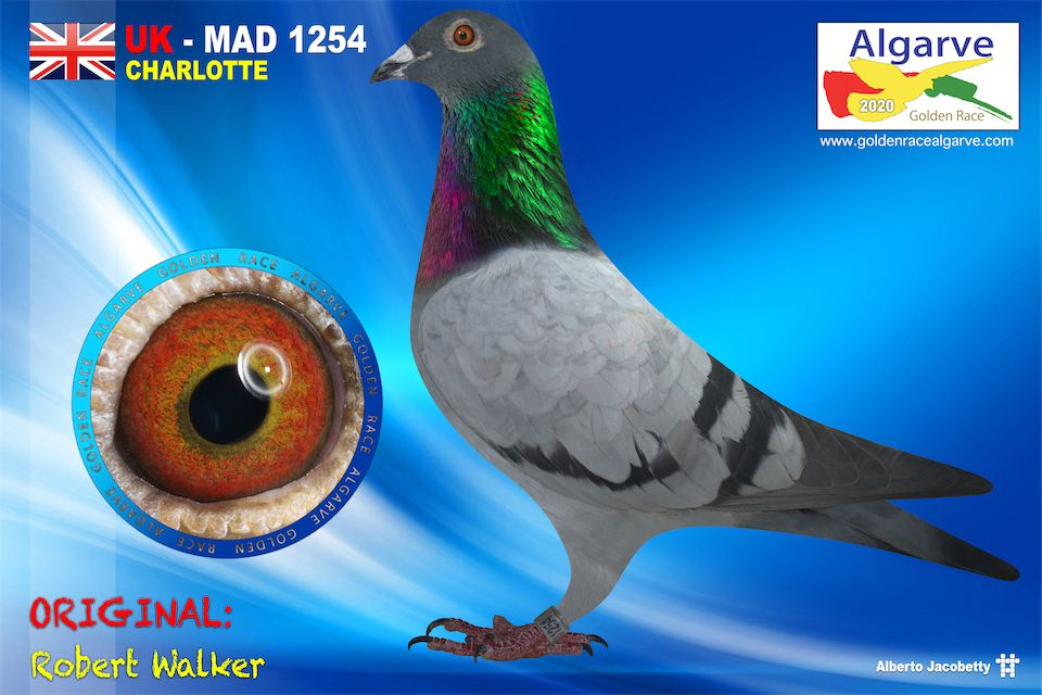 NEHU-MAD-1254/20 - MACHO - ROBERT WALKER