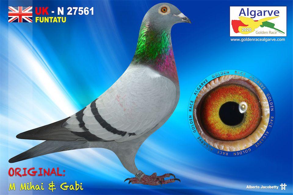 GB-N-27561/20 - HEMBRA - M MIHAI & GABI