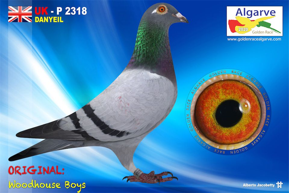 GB-P-02318/20 - HEMBRA - WOODHOUSE BOYS